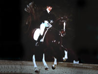 Millins Chartered Insurance Brokers - equestrian policies